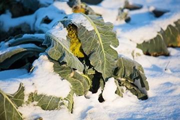 Frisches Gemüse im Winter ernten: Die besten Sorten und einfachsten Methoden für Garten und Balkon. Poster mit praktischem Anbau- und Erntekalender. 77 verschiedene Gemüse -