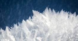 winterharte Balkonkräuter