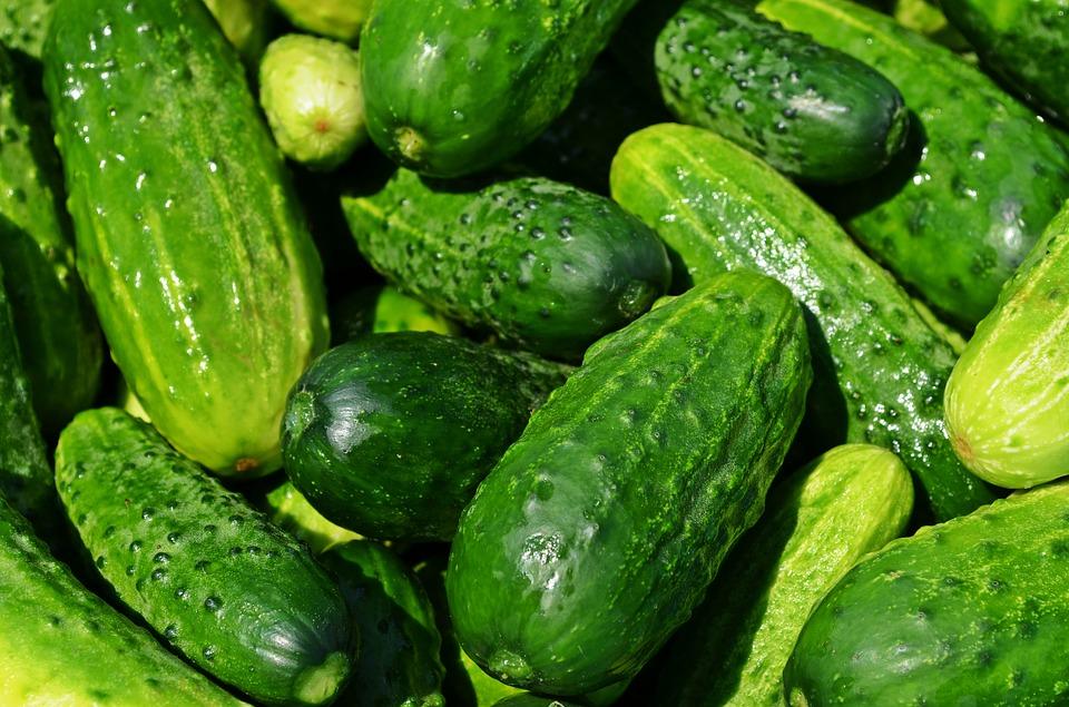 Außergewöhnlich ᐅ Snackgurken anbauen ++ Meine 10 besten Balkon Garten Tipps ++ @SY_48
