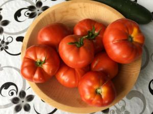 reife Tomaten nach Ernte