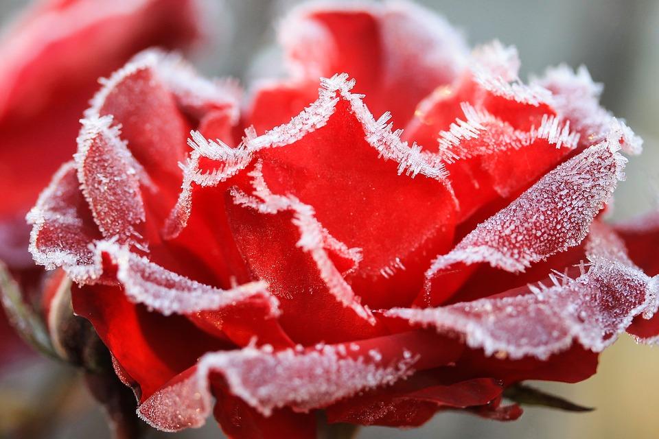 Berühmt ᑕ❶ᑐ Balkon Garten winterfest machen ++ Winterschutz für Pflanzen ++ #LJ_43