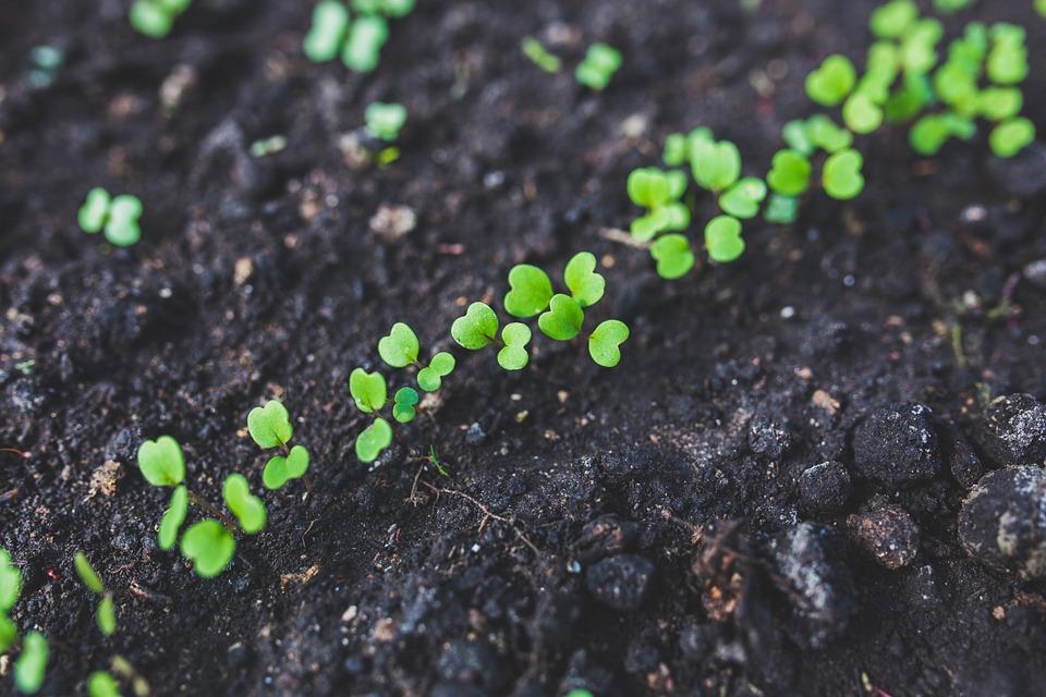Etwas Neues genug Rucola anbauen, pflegen & ernten ++ Garten & Balkon ???? ++ #PG_29