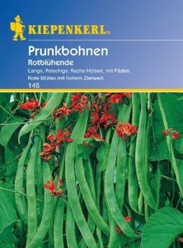 Bohne Rotblühende / Feuerbohnen - 1