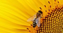 Bienen auf dem Balkon