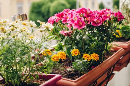 Schöne Balkonblumen