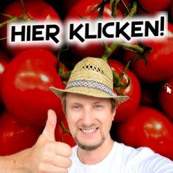 Tomatenkurs